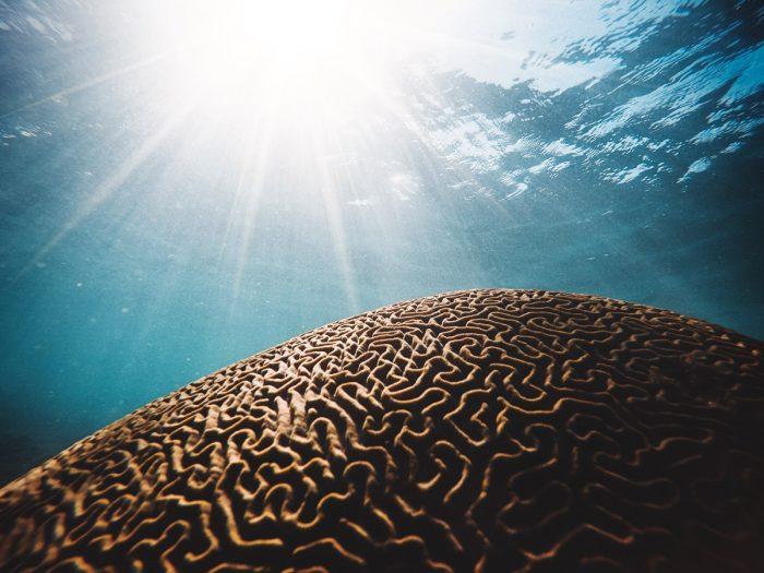 Luce e impulsi neuronali al cervello