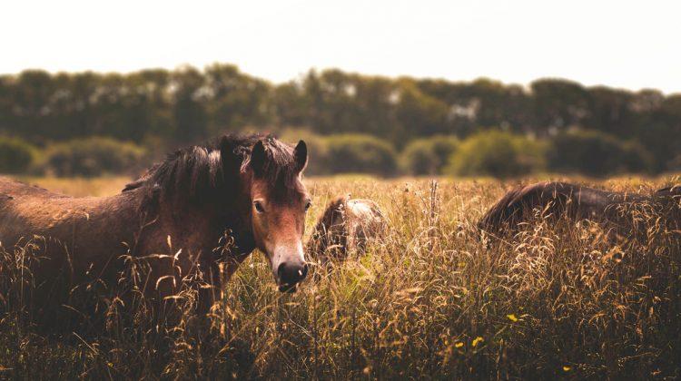 cavalli-selvaggi