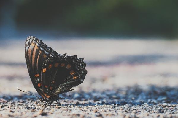 la farfalla come metafora della crescita personale